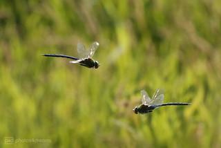 mid-air encounter