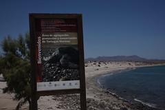 MX8_2767 (takkotakko) Tags: baja ca california mexico sur brad pease 2018 summer sea turtle tortugas marinas archipielago de san lorenzo