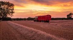 Farming Series (Harvest) (Ian Emerson) Tags: summer harvest wheat grain swath sunset farming farmland englan claas jcb fastrac canon 6d nottinghamshire machinery tractor combine harvester