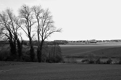 Loker, Belgium (bm^) Tags: landscape nature loker westvlaanderen belgië belgique belgium bw black white zwartwit boom tree nikon d700 nikond700 zeiss planar5014zf westernflanders be trees bomen arbre arbres field veld fields velden