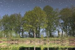 Kopfstand am Fluss (julia_HalleFotoFan) Tags: frühling saale bäume spiegelung wasser fluss