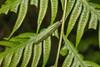 IMG_3044 (vlee1009) Tags: 2018 60d april canon taiwan macro nature 北橫 caterpillars larvae