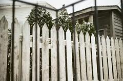 (aashleyhammond) Tags: tree fence backyard garden trees winter wintertime snow frost canada newfoundland explorenl 35mm 35mmfilm filmphoto filmphotography filmisnotdead urban stjohns staybrokeshootfilm analog analogphotography analogphoto