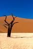Namibia : Dead Vlei (Hervé Marchand) Tags: namibia dunes sand tree accacia dead vlei argile blue yellow white