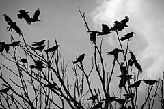 The Birds - Canal du Rhône au Rhin (petrwag) Tags: sonya6500 tamron70300 bw blackandwhite blancoynegro blackwhite noiretblanc noirblanc černobílé clickcamera
