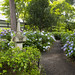 Hydrangea Garden アジサイ園