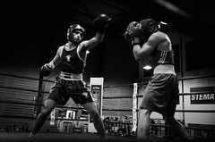 32911 - Hook (Diego Rosato) Tags: boxe boxing pugilato boxelatina ring match incontro nikon d700 2470mm rawtherapee bianconero blackwhite pugno punch hook gancio