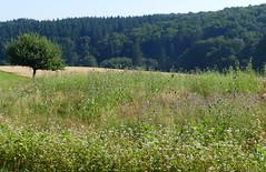 2018 Germany // Wanderung bei Freienfels im Taunus // (maerzbecher-Deutschland zu Fuss) Tags: wanderweg wandern deutschland germany maerzbecher deutschlandzufuss deutschlandzufus taunus 2018 hessen