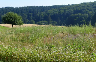 2018 Germany // Wanderung bei Freienfels im Taunus //