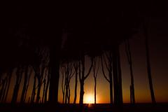 Fragile (kuestenkind) Tags: sunset sonnenuntergang nienhagen ostsee balticsea gespensterwald geisterwald