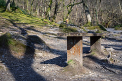 Shadows (Howie Mudge LRPS BPE1*) Tags: bench seat trees light shadows grass moss outside outdoors greatoutdoors woods woodland forest gwynedd wales cymru uk sony sonya7ii sonyalphagang minolta58mmf14lens adaptedlens adaptedglass landscape nature ngc nationalgeographic travel