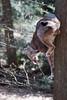 Upside down (Cloudtail the Snow Leopard) Tags: luchs lynx katze cat feline animal tier säugetier mammal beutegreifer predator pinselohr