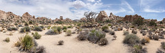 Hidden Valley – Joshua Tree National Park (subliminalnonsense) Tags: hiddenvalleynaturetrail joshuatreenationalpark california usa us unitedstates nationalpark joshuatrees trees tree rocks desert sandy widescreen highres panorama panoramicview panoramicscene panoramic southeasterncalifornia hiking camping canoneos750d canon campground rockformations grass grassland yuccabrevifolia mojave mojavedesert riversidecounty sanbernardinocounty hiddenvalley deadwood sand rock landscape