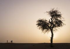 Dubai Desert (kungfuslippers) Tags: dubai desert safari sunset minimalist tree silhouette uae