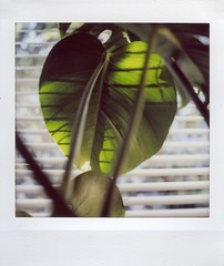 Late sun (mortiemctavern) Tags: instax lomography analog lomographysquare polaroidweek roidweek2018 day21 plant window light lomoinstant
