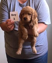 Ella Boy 3 4-21
