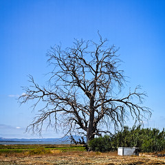 The Old Tree (MrBlueSky*) Tags: tree sky blue nature outdoor horticulture carrasqueira alentejo portugal travel canon canonpowershot can