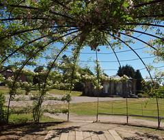 2018_06_0578 (petermit2) Tags: playground greyworld pergola aviary rose roses yorkshiresculpturepark ysp westbretton wakefield westyorkshire yorkshire
