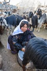 20180330-_DSC0176.jpg (drs.sarajevo) Tags: sarvestan ruraliran iran nomads farsprovince chamsatribe