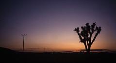 Desierto de Mojave (Mono Andes) Tags: california mojave desierto joshuatree ontheroad camino atardecer oldwomanspringrd