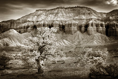 Capitol Reef National Park, Utah (EdBob) Tags: capitolreef nationalpark waterpocket fold geology geological sandstone sepia monochrome monochromatic tree rock blackwhite blackandwhite utah southwest american park spring destination travel landscape torrey nature outdoors edmundlowephotography edmundlowe juniper sage desert brush arid climate change scenic allmyphotographsare©copyrightedandallrightsreservednoneofthesephotosmaybereproducedandorusedinanyformofpublicationprintortheinternetwithoutmywrittenpermission usa america