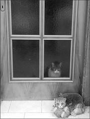 Attraverso (Aellevì) Tags: dentro fuori vetro chiuso gatto porta trasparenze riccio uscio
