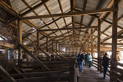 Inspecting the Woolshed (oz_lightning) Tags: australia canon6d canonef1635mmf4lis dunlopstation nsw westerndivision agriculture building decay interior outback rural woolshed louth newsouthwales aus