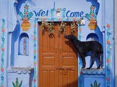 bundi 2017 (gerben more) Tags: bundi rajasthan blue dog doorway india pet animal