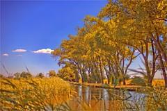 UITERMEER (bert • bakker) Tags: vecht weesp uitermeer water trees bomen bank oever s gravelandseweg dammerweg