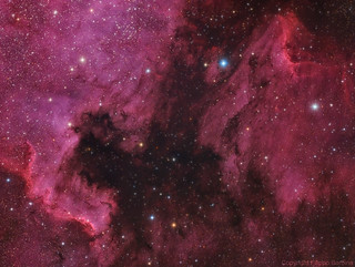 NGC7000 + IC5070 North America and Pelican Nebulae