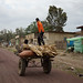 Transporting maize stalks with donkey cart near Hawassa