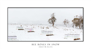 Bee boxes in snow