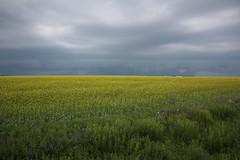 Stormy Skies 2 (Craigford) Tags: kelvingrove pei canada storm clouds sky field mustard rural
