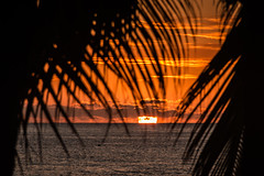 D21616E7 - Caribbean Sunset on Roatan (Bob f1.4) Tags: sunset orange sky last minute horizon water caribbean sea palm frons trees silhouette clouds fire roatan honduras central america island beach infinity bay west