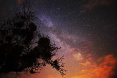 PGH51169 (klangcharakter) Tags: nacht nachthimmel sterne astro milchstrase beerfelden odenwald hessen juli 2018 panasonic gh5 mft lumix laowa f20 75mm iso3200 30sek langzeitbelichtung ultraweitwinkel baum milkyway