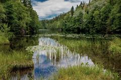 Tranquility (bjorbrei) Tags: water lake tarn pond marsh grass waterlilies trees forest sky clouds reflections calm tranquil linderudkollen solemskogen lillomarka marka oslo norway langevann