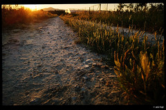 IMG_20180621_061421 (anto-logic) Tags: alba sunset sentiero trail ghiaia gravel tratturo giallo yellow piante flora plants erba grass cielo blu blue sky primavera spring dof profonditàdicampo focus bokeh natura caldo sole italia toscana prato campagna fiori bello azzurro acqua chiara luce rosso fence libertà libero hot winter nature sun italy tuscany countryside meadow flowers beautiful clear light verde green freedom free nice pretty lovely gorgeous fabulous wonderful pov pointofview puntodivista leica huawei p20pro