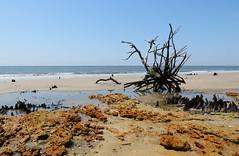 Botany Bay (USA) (Todd Evans) Tags: canon t6i botanybay edistoisland beach southcarolina