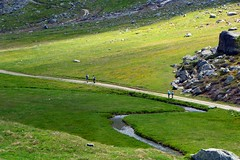 Verso il rifugio (giorgiorodano46) Tags: giugno2018 june 2018 giorgiorodano brusson rifugioarp hiking torrente sentiero track randonnée valdaosta valléedaoste italy mountain nikon