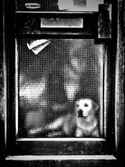 Day 292 When you coming home Mum!!! (Clare Pickett) Tags: glass paper box letter home door dog