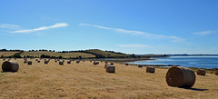 another summer bale-scape (conall..) Tags: bale bales hay round castleward strangford lough strangfordlough countydown northernireland