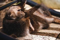 Little lady (garethottywill) Tags: fluffy soft cuddle rabbit pet cute