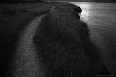 wetlands path  #856 (lynnb's snaps) Tags: 2018 35mm bw film leicaiiic leicafilmphotography barnack wetlands coast sydney australia evening sunset nature landscape pathwaystracks path grasses lake lagoon water lowlight moody pictorialism blackandwhite bianconegro bianconero blackwhite biancoenero blancoynegro noiretblanc schwarzweis monochrome ishootfilm rangefinder ©copyright2018lynnburdekin