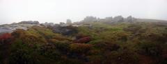 Grinah Stones (l4ts) Tags: landscape derbyshire peakdistrict darkpeak bleaklow grinahstones gritstone gritstonetors moorland heather bilberries lowcloud mist rain mobilephonecamera sonyxperiaxz