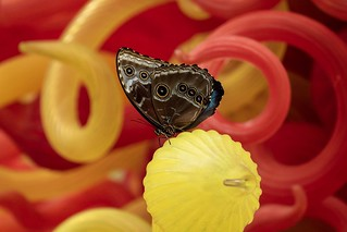 Butterfly at the Franklin Park Conservatory.
