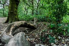Twisted Branch (RTJones Photography) Tags: green woodland leeds morningwalk trees branch