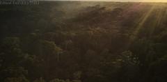 Colombian rainforest (pbertner) Tags: rainforest colombia southamerica leticia drone landscape sunset
