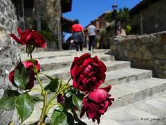 Withered roses in the Monastery of Great Meteoron (cod_gabriel) Tags: meteora greece grecia marelemeteor roses trandafiri dof depthoffield bokeh shallowfocus shallowdof shallowdepthoffield