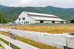 White barn (Washington State Department of Agriculture) Tags: scenic summer washingtonstatedepartmentofagriculture barn farm july washington washingtongrown washingtonstate