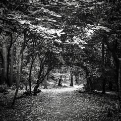 E1E444BF-43BB-4735-8AD7-76759ECA7613 (Kathi Huidobro) Tags: nature arch pathway treecanopy blackwhite bw monochrome secretgarden crystalpalace london londonopenspaces southlondon woods trees woodland